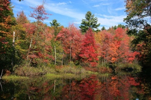New-Hampshire-Fall-Foliage